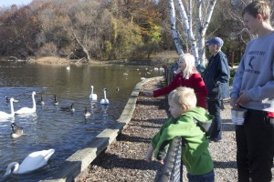 Family feeding corn to waterfowl at the Kellogg Bird Sanctuary