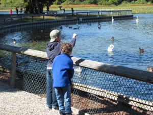 Visitors feeding Trumpeter Swans at Sanctuary credit Tiffany Greenfield