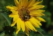 Bird Sanctuary Receives Grant for the Pollinator Garden!