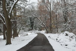 Snowy trail at the Kellogg Bird Sanctuary