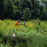 Volunteers in the Sanctuary's Pollinator Garden
