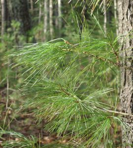 Wild edible plants along with Sanctuary's trails