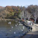Shore of Wintergreen Lake