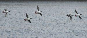 Waterfowl over Wintergreen Lake