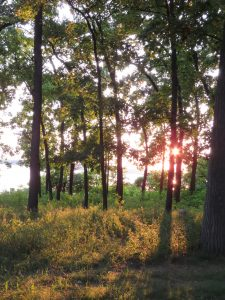 Sunset at Kellogg Biological Station