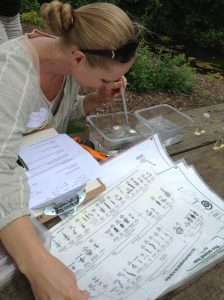 Woman sorting and identifying macroinvertebrates
