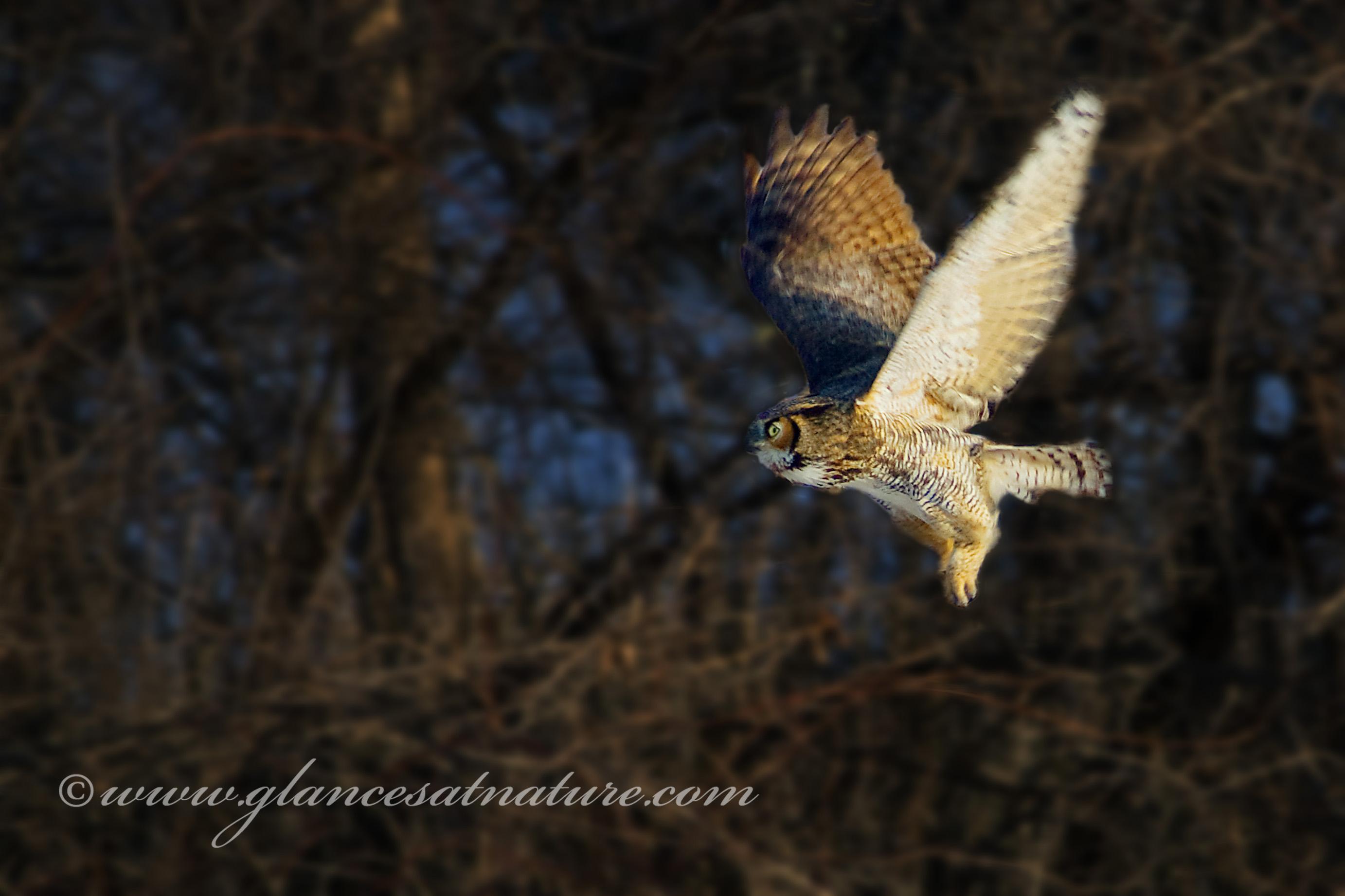 Owling 101