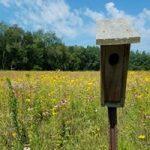 Nestbox in field