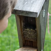 Examining what is inside a nest box