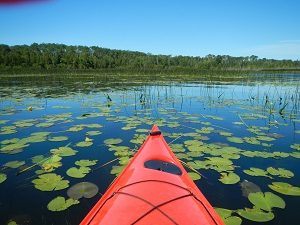 Kayaking, looking out over aquatic plants floating on water surface