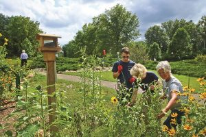 Volunteers tending to the Pollinator Garden