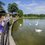 Family feeding corn to trumpeter swans on Wintergreen Lake