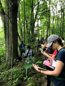 A group of people stand single file on a wooded trail, looking at field guides.