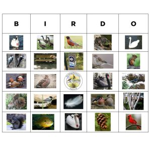 Bingo-style grid containing square photos of birds, mammals, plants, and physical features at the Kellogg Bird Sanctuary.