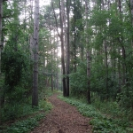 2008 - Wooded Trail