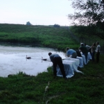 2010 - Release of Canada Geese that were treated after the Kalamazoo River Oil Spill